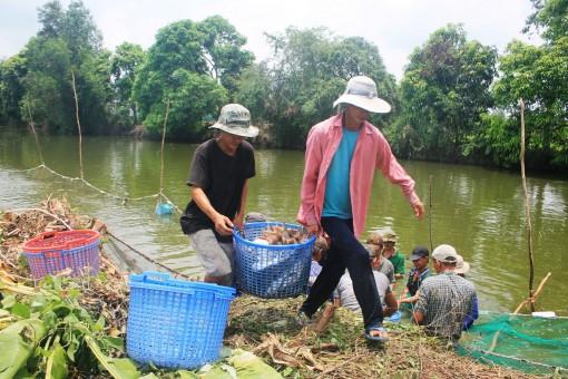 Giá nhiều loại cá nuôi giảm