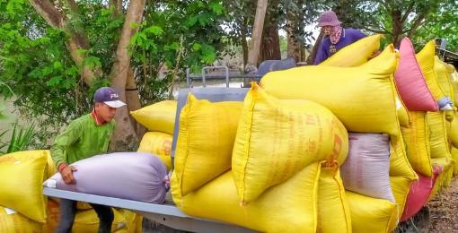 Sản xuất gạo ngon, chất lượng cao đáp ứng nhu cầu thị trường