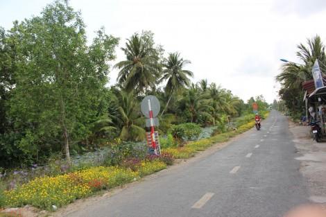 Tuyến đường đẹp sắc hoa