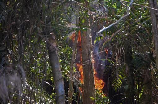 Cà Mau: Cháy vùng đệm rừng U Minh Hạ