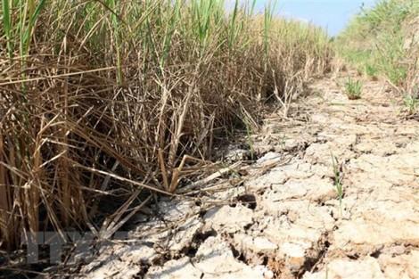 Xâm nhập mặn khu vực ĐBSCL ở mức cao trong tháng 4
