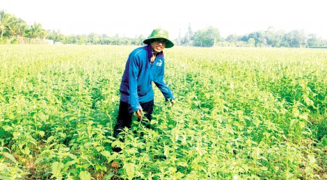 Linh động sản xuất  nông nghiệp mùa nắng hạn