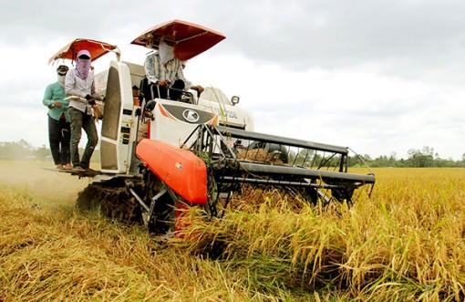 Cơ giới hóa giảm thất thoát sau thu hoạch trong sản xuất lúa