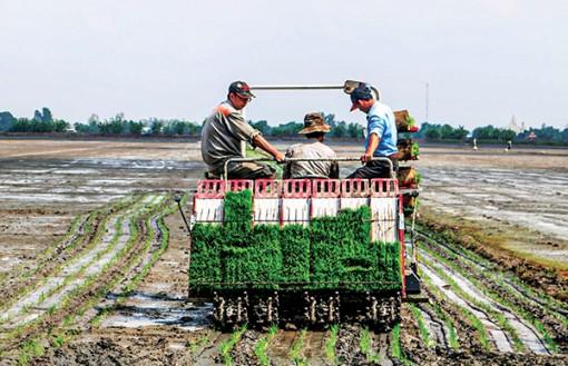 Hiệu quả từ cơ giới hóa khâu gieo cấy lúa