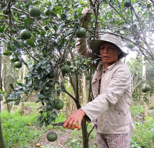 Phong Điền xây dựng nông thôn mới chất lượng, bền vững