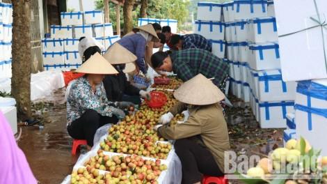 Bắc Giang: Đề xuất Bộ Công Thương đồng chủ trì hội nghị trực tuyến xúc tiến tiêu thụ vải thiều năm 2020