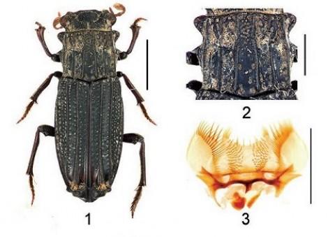 Công bố phát hiện một số loài côn trùng mới tại Việt Nam