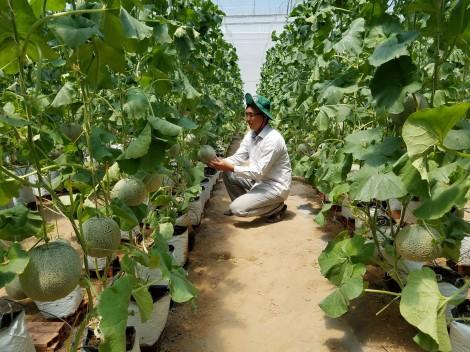 Chuyển đổi cây trồng  thích ứng với biến đổi khí hậu