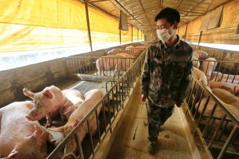 """Cảnh báo """"ổ dịch"""" từ chăn nuôi công nghiệp"""