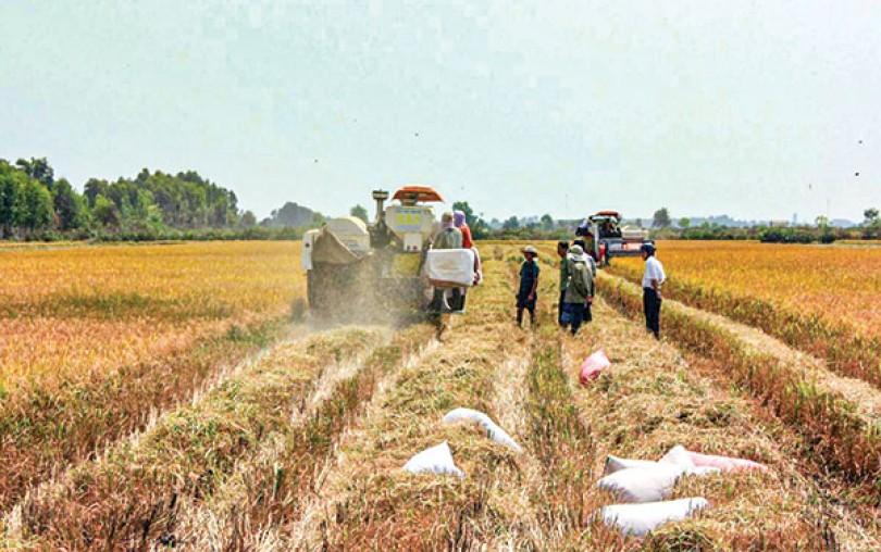 Thúc đẩy liên kết, phát triển chuỗi giá trị lúa gạo chất lượng cao