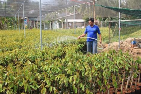 Siết chặt quản lý giống cây trồng