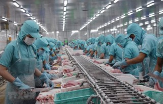 Mekong Delta firms see new orders down 80.7 percent due to COVID-19
