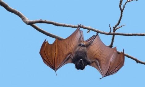 Liên Hợp Quốc cảnh báo các bệnh dịch lây từ động vật sang con người