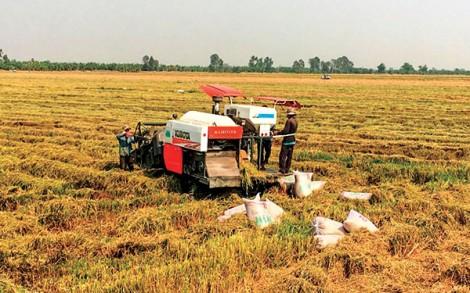 Liên kết sản xuất, gia tăng giá trị nông sản