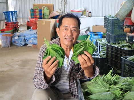 Độc đáo với cách chong đèn trồng tía tô xuất khẩu