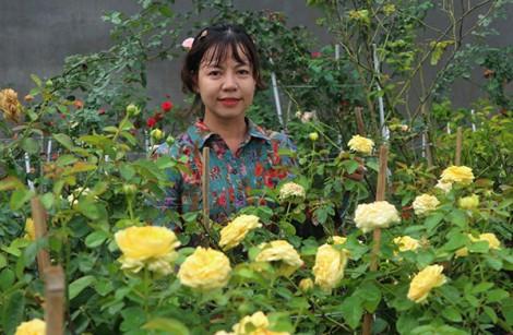Ấn tượng một vườn hồng