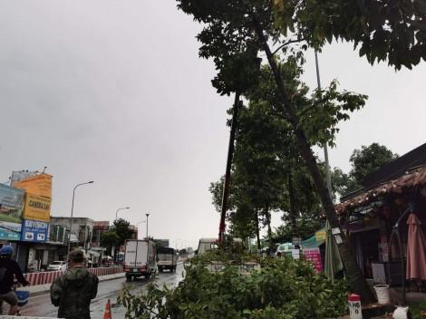 58 căn nhà bị sập, tốc mái và nhiều cây xanh đổ ngã do ảnh hưởng hoàn lưu cơn bão số 2