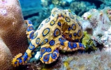 Tuyên truyền về động vật biển độc, bảo đảm an toàn cho bộ đội