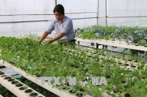 Tien Giang enjoys fruitful agricultural restructuring
