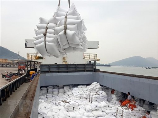 Vietnam's rice exports to Africa continue to rise