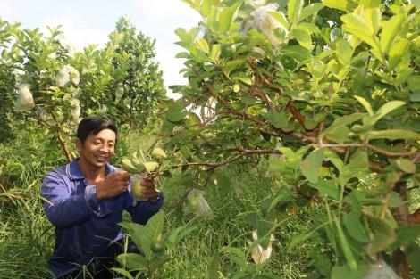 Liên kết sản xuất trái cây an toàn, phục vụ tiêu dùng nội địa và xuất khẩu