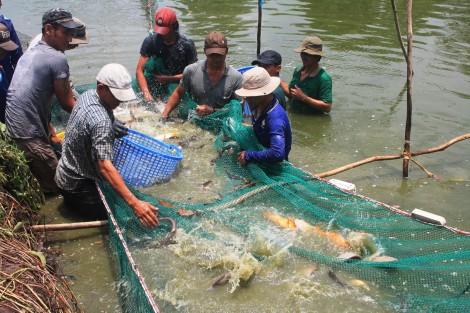 Nâng cao hiệu quả quan trắc môi trường phục vụ nuôi thủy sản