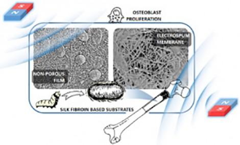 Vật liệu mới giúp tái tạo xương