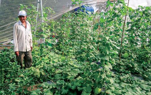 Khuyến nông - hỗ trợ nông dân tăng hiệu quả sản xuất