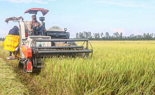 Cần Thơ thu hoạch hơn 20.660ha lúa thu đông