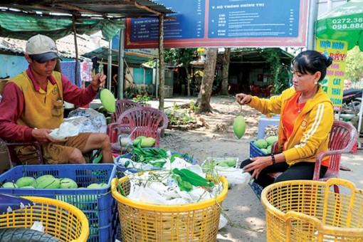 Nông dân trồng xoài phấn khởi vì giá tăng mạnh