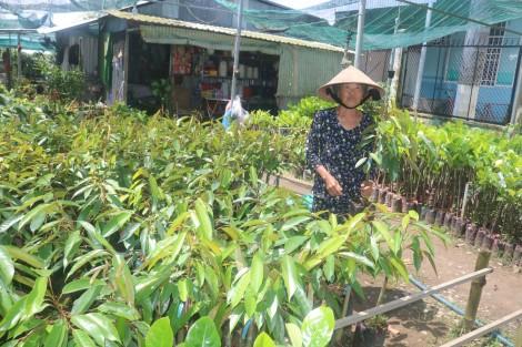 Sức mua giảm, nhưng giá cây giống ăn trái vẫn ở mức cao