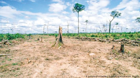 Ông Bolsonaro bảo vệ rừng Amazon?
