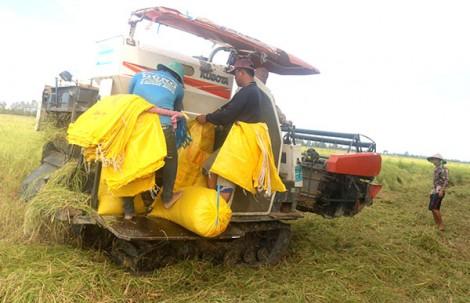 Cần Thơ phát triển sản xuất lúa gạo theo hướng chất lượng cao, bền vững