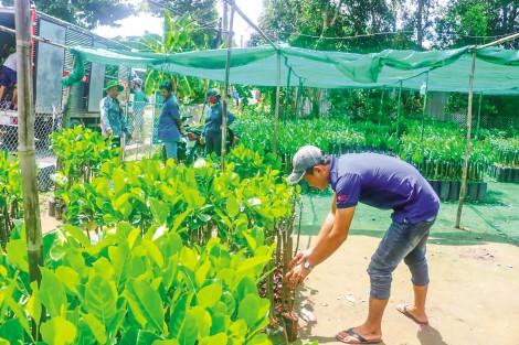 Nâng cao năng lực sản xuất, kinh doanh giống cây trồng