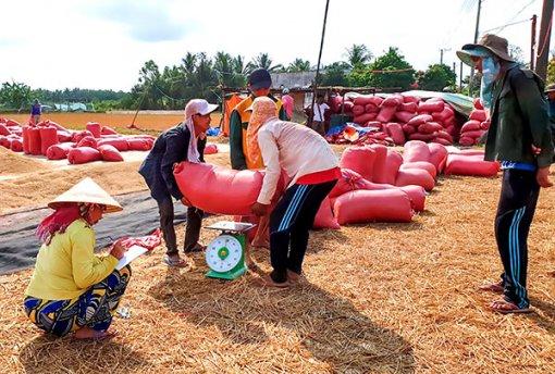 Sản xuất lúa gạo thắng lợi