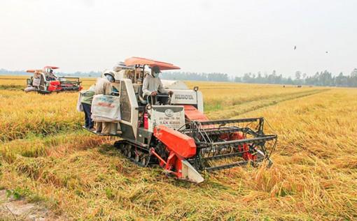 ĐBSCL:  Giá thành sản xuất lúa được kéo giảm