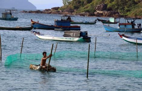 Bảo tồn biển Việt Nam: Giải pháp để phát triển bền vững kinh tế biển