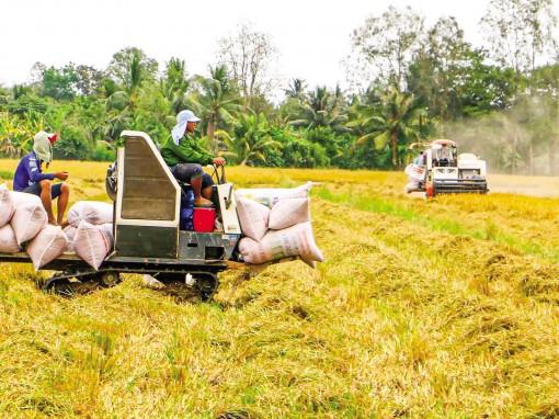 Phát triển cánh đồng lớn giúp nâng cao  lợi nhuận cho nông dân