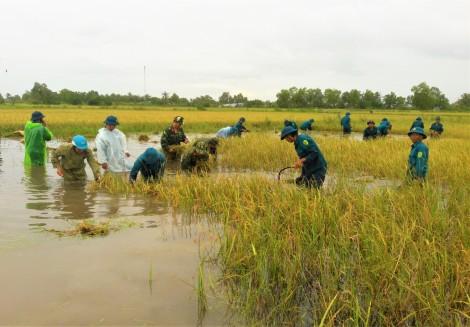 Cà Mau tìm cách hỗ trợ dân khôi phục sản xuất sau thiên tai