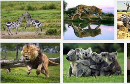 Cảm biến chống săn bắt động vật hoang dã