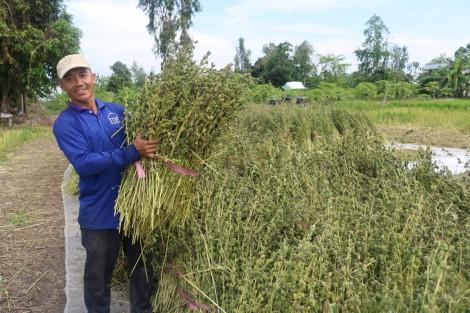 Sản xuất nông nghiệp xanh thích ứng với biến đổi khí hậu