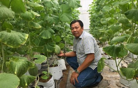 Ứng dụng công nghệ cao trồng dưa lưới