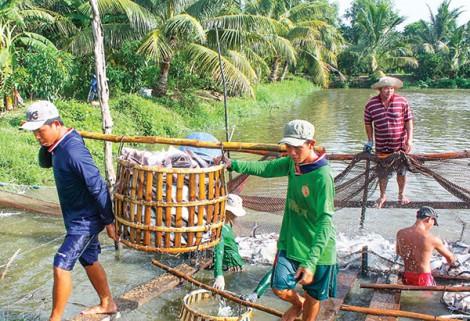 Ứng dụng tiến bộ khoa học kỹ thuật phát triển bền vững ngành thủy sản