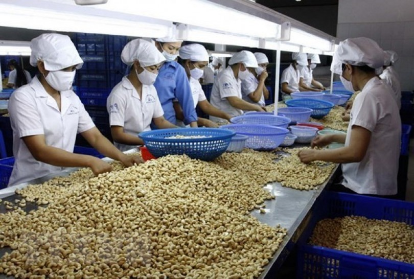 Vietnam remains world's largest producer, exporter of cashew nuts