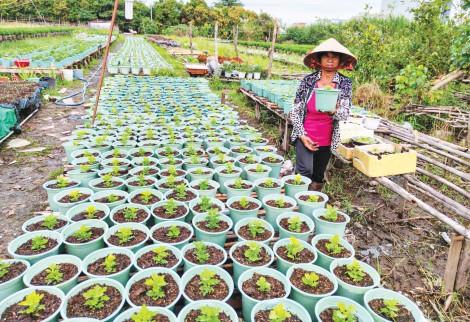 Nông dân xuống giống nhiều loại hoa kiểng  phục vụ thị trường Tết