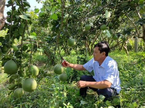 """Làm nông """"tử tế"""" ở Đồng bằng sông Cửu Long<br>Bài 2: Hợp tác vì những mùa quả ngọt"""