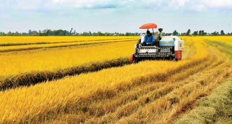 Liên kết sản xuất nông nghiệp bền vững