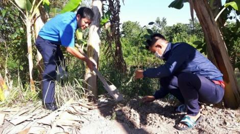 Trồng 300 cây sao hưởng ứng Tháng Thanh niên năm 2021