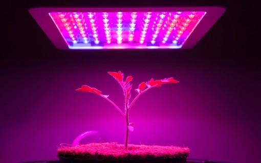 Ánh sáng LED có thể gia tăng  hoạt chất sinh học trong thảo mộc