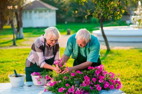 Làm việc nhà giúp người cao tuổi cải thiện sức khỏe trí não